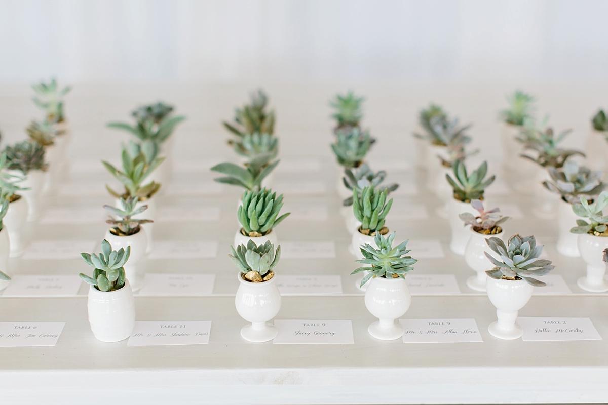 succulent cups